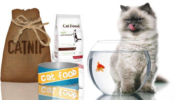 Как полезно накормить кошку